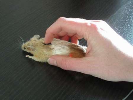 компьютерная мышка Real Mouse